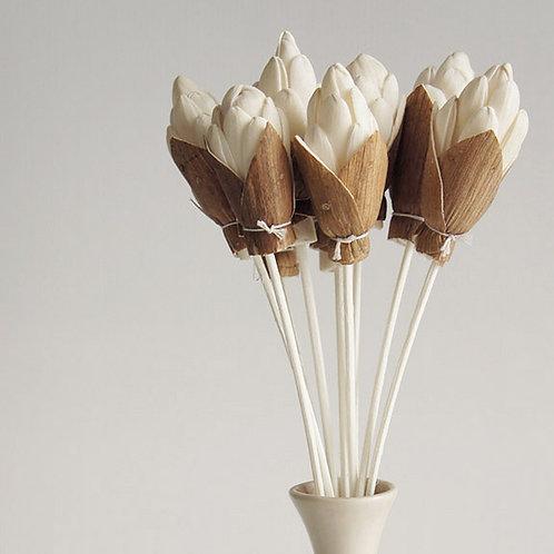 Set of 10 Ginger Sola Flower for Fragrance Diffuser.