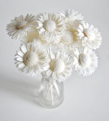 Set of 10 White Daisy Sola Flower for Home fragrance Diffuser.