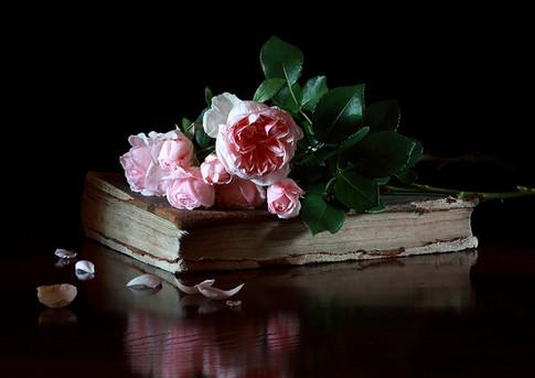 Au nom de la rose.