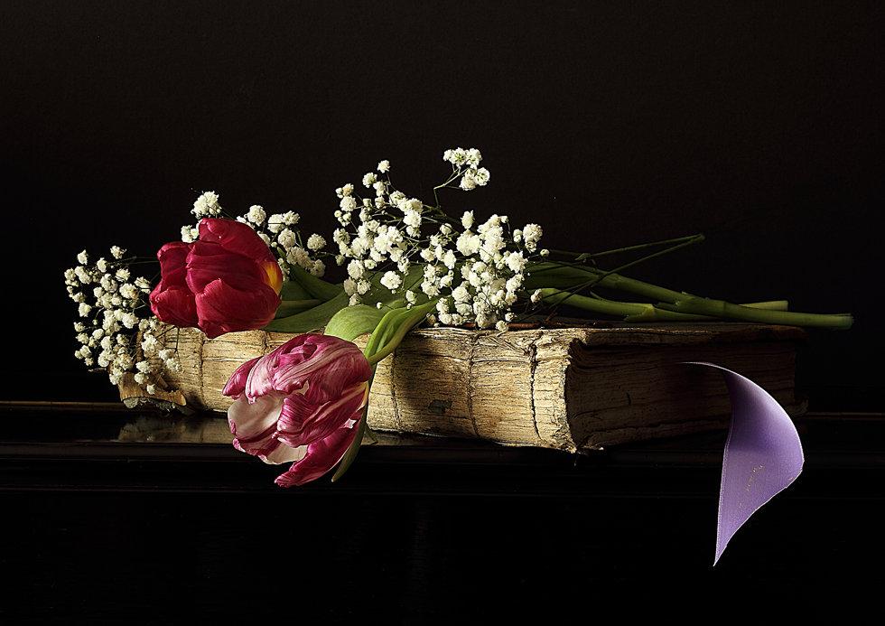Tulipes au ruban N° 9265
