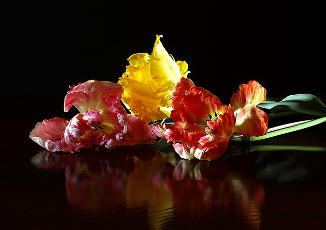 les tulipes perroquet