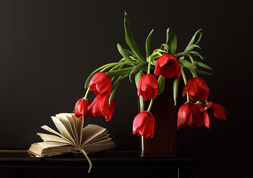 Tulipes rouges tombantes N°0434