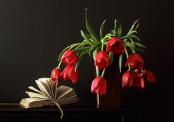 Tulipes rouges tombantes N°0434
