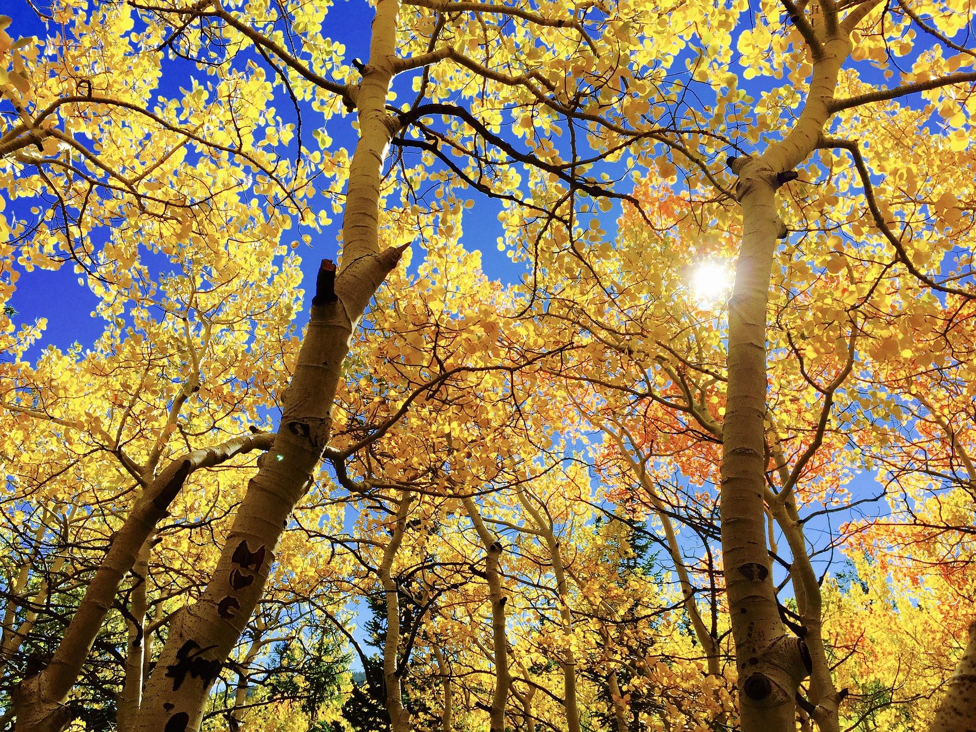 leaves-1363766_1920