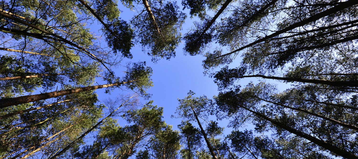 forests-231066_1920_edited