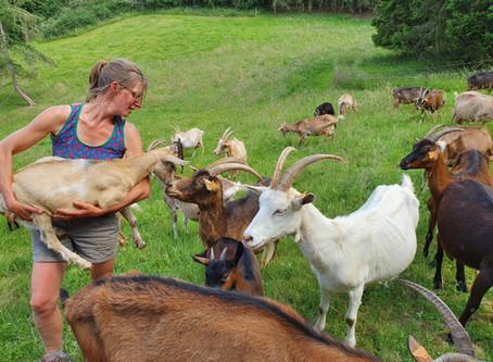 La Chèvrerie de Borlon : le petit paradis de Géraldine, nouvelle productrice N&P