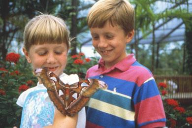 ftlauderdale-butterfly-world