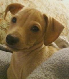 IG pup in AZ