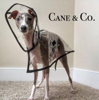Italian Greyhound raincoat