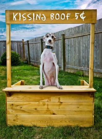 Entrepreneur Keaton, the Italian Greyhound