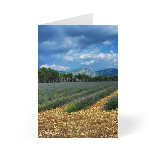 Provence Lavender Fields Greeting Cards (8 pcs)