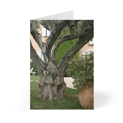 Ancient Olive Tree Greeting Cards (8 pcs)