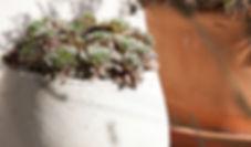 Kräuterstempelmassage Pindasveda