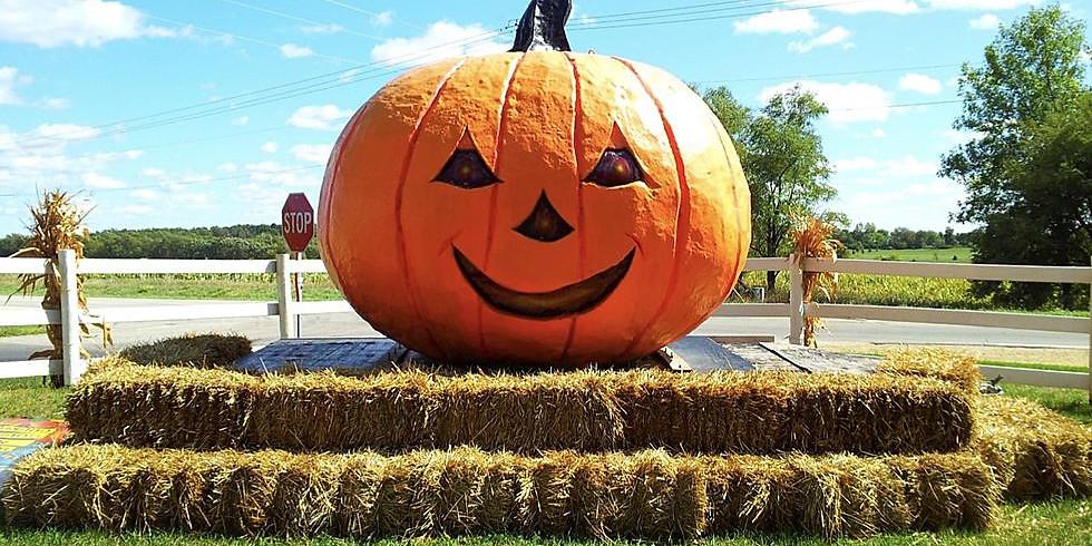 Club 456 Pumpkin Patch