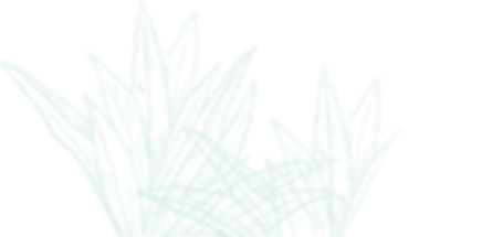 agave-azul-FIN.png