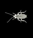 Le cafard ou blatte