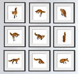 Fuchsbilder im Schnee