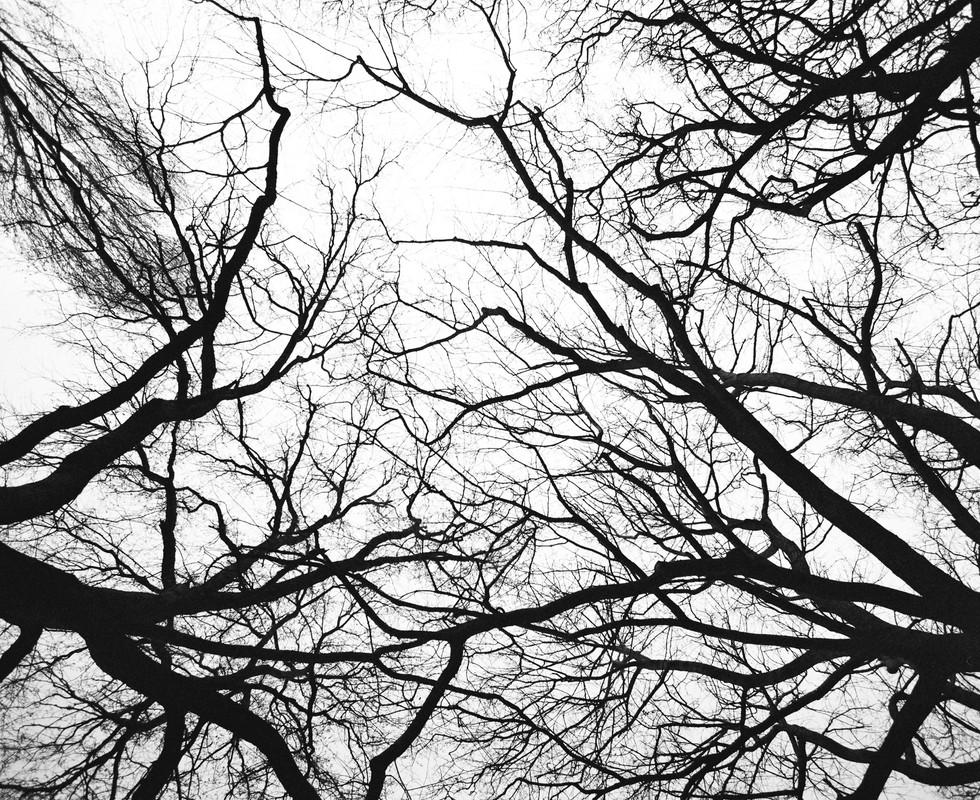 Tree Top 4