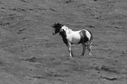 Kaikoura Horses Five