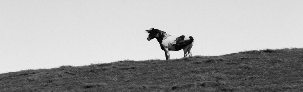 Kaikoura Horses Six
