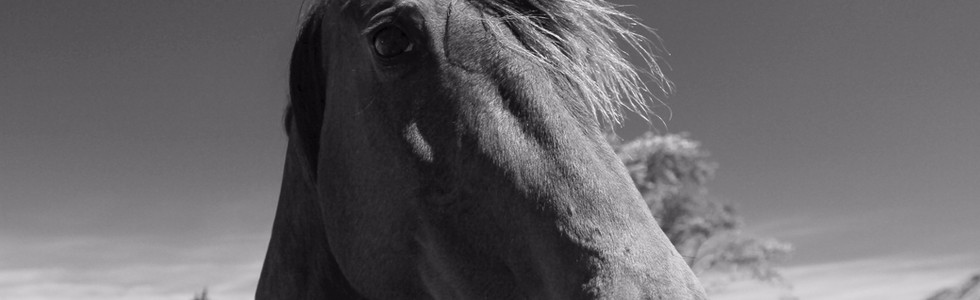 Kaikoura Horses Nine