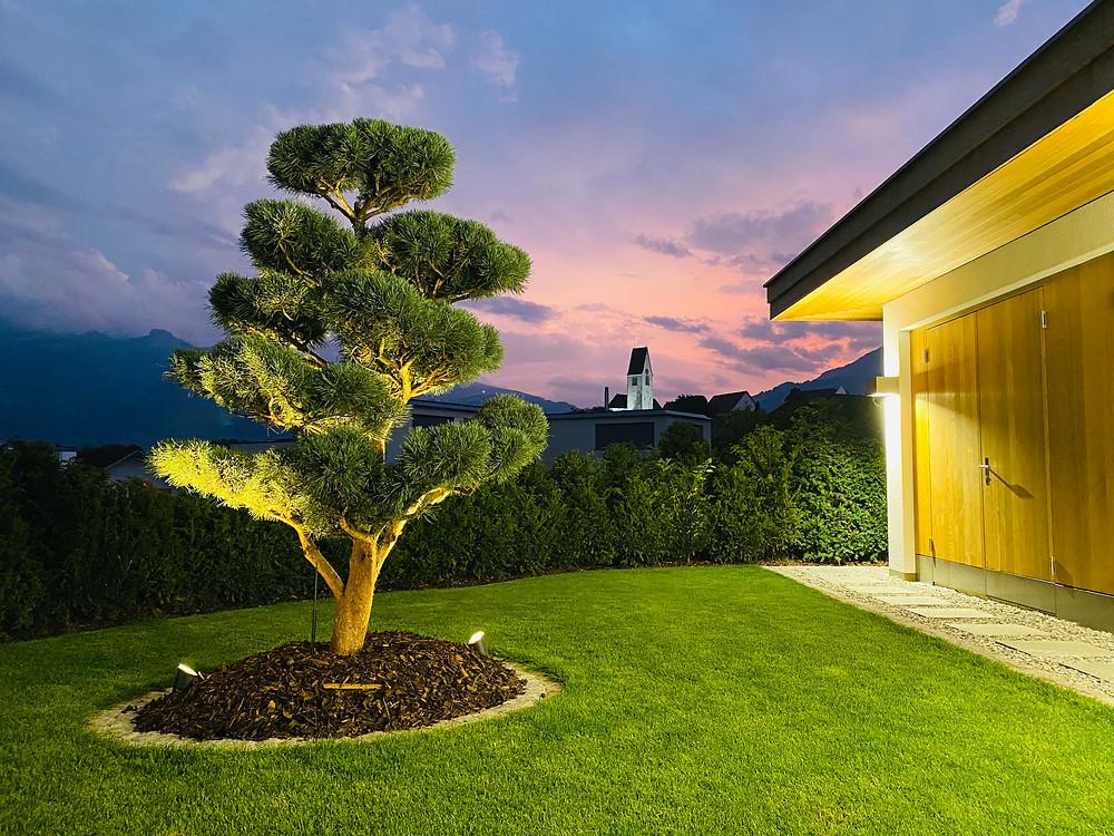 Beleuchtung im Garten EFH