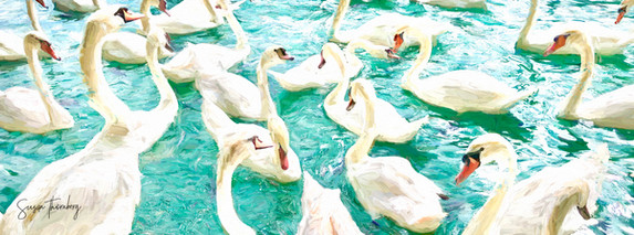 Swan timeline.jpg