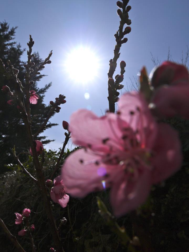 My UK back garden in the sun 2012