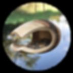mageore oiseau bois de manguier