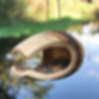 Toucan graines 480px carre.png