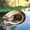 Thumbnail: Toucan