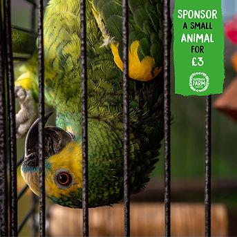 Sponsor-a-Small-Animal_OF.jpg