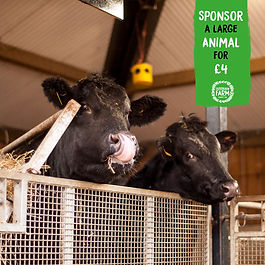 Sponsor-a-Large-Animal_OF.jpg