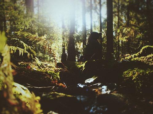 Fantasy Forest preset