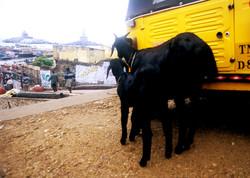 india_021.jpg