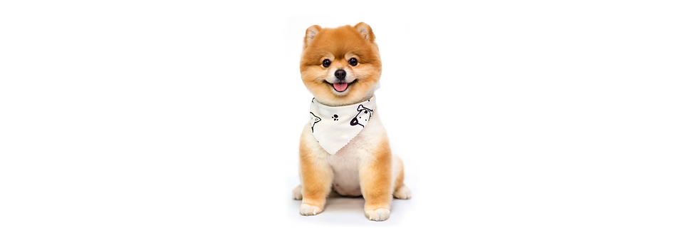 Banner-Dog Grooming-01.png