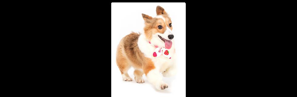 Banner-Dog Treats-01.png