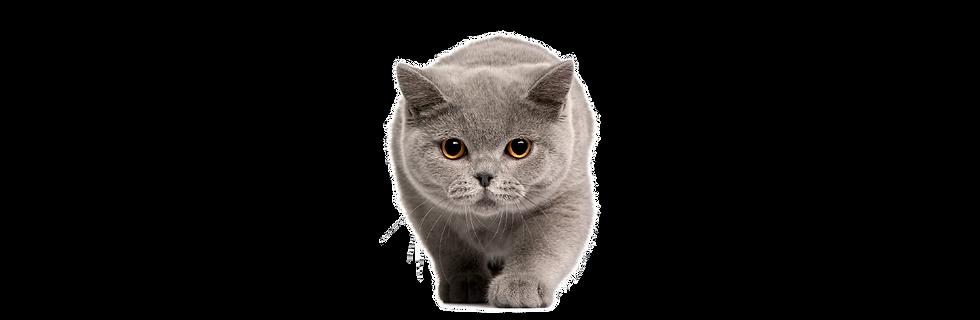 Banner-Cat Litter-01.png