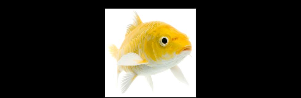Banner-Fish Lighting-01.png