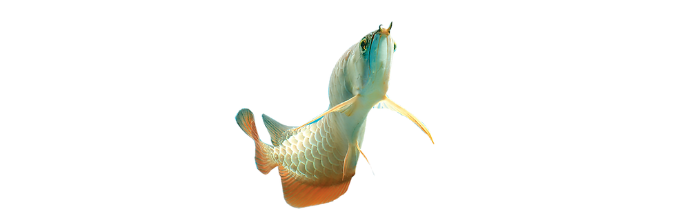 Banner-Fish Heater-01.png