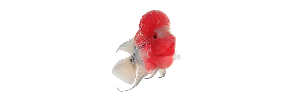 Banner-Fish Food-01.jpg