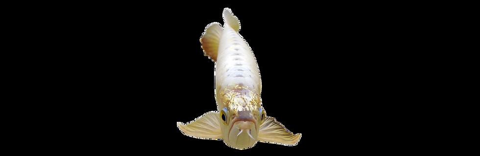 Banner-Fish Tank-01.png