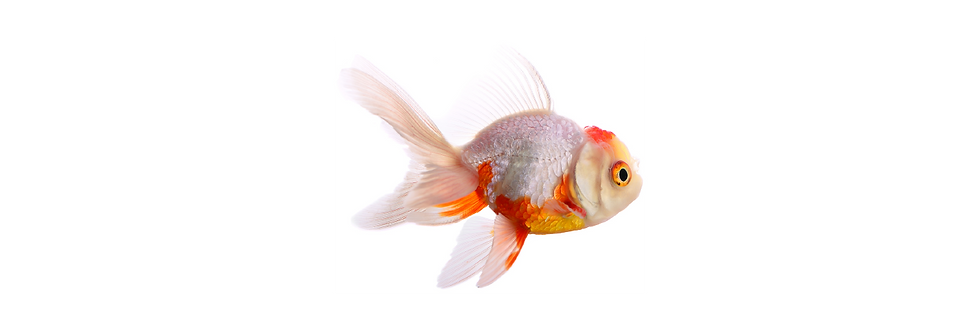 Banner-Fish Filter-01.png