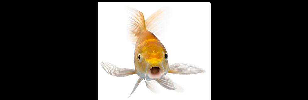 Banner-Fish Pump-01.png