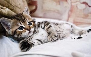 kitten_lying_striped_small_cute_102741_3