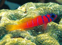 Marine Aquarium Fish-2