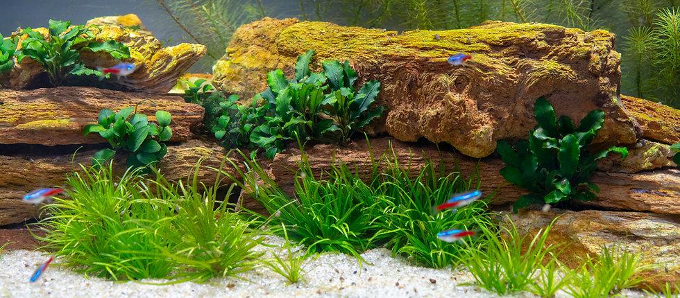 stones-plants-aquarium.jpg