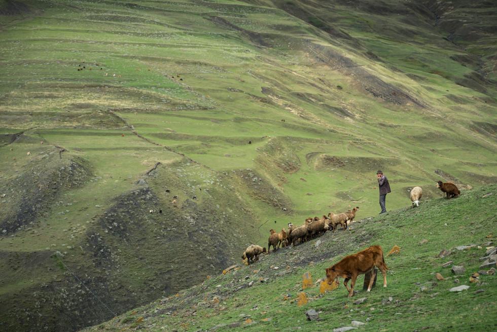 Shepherd Xinaliq Azerbaijan (1 of 2).jpg