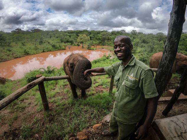 Elephant Breakfast Feeding GoPro Livings