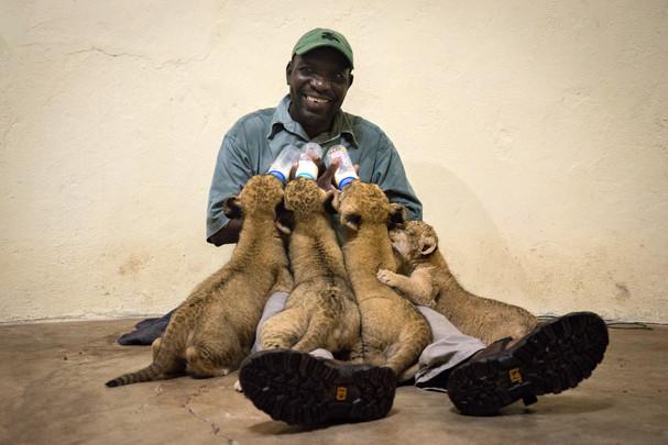 Ian Smile Cub Feeding Mukuni Big 5 Lands